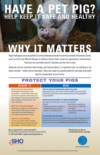 Pet Pig Care and Tips